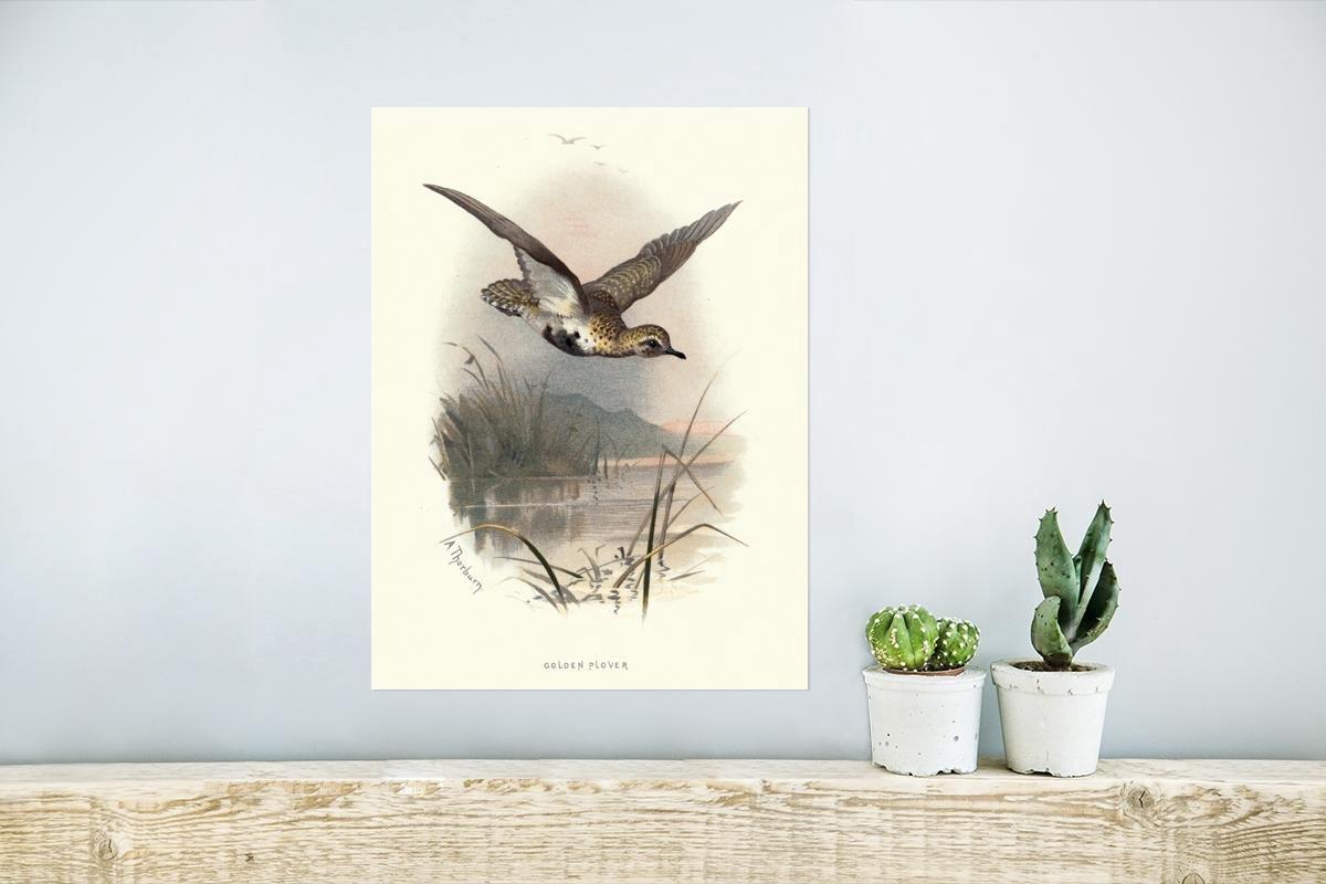 Antieke vogelprent goudplevier poster papier 30x40 cm - klein - Foto print op Poster (wanddecoratie woonkamer / slaapkamer)