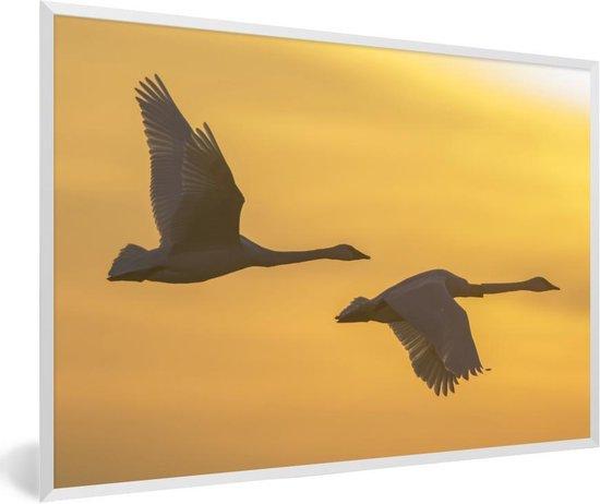 Foto in lijst - Twee trompetzwanen vliegen bij zonsopgang fotolijst wit 60x40 cm - Poster in lijst (Wanddecoratie woonkamer / slaapkamer)