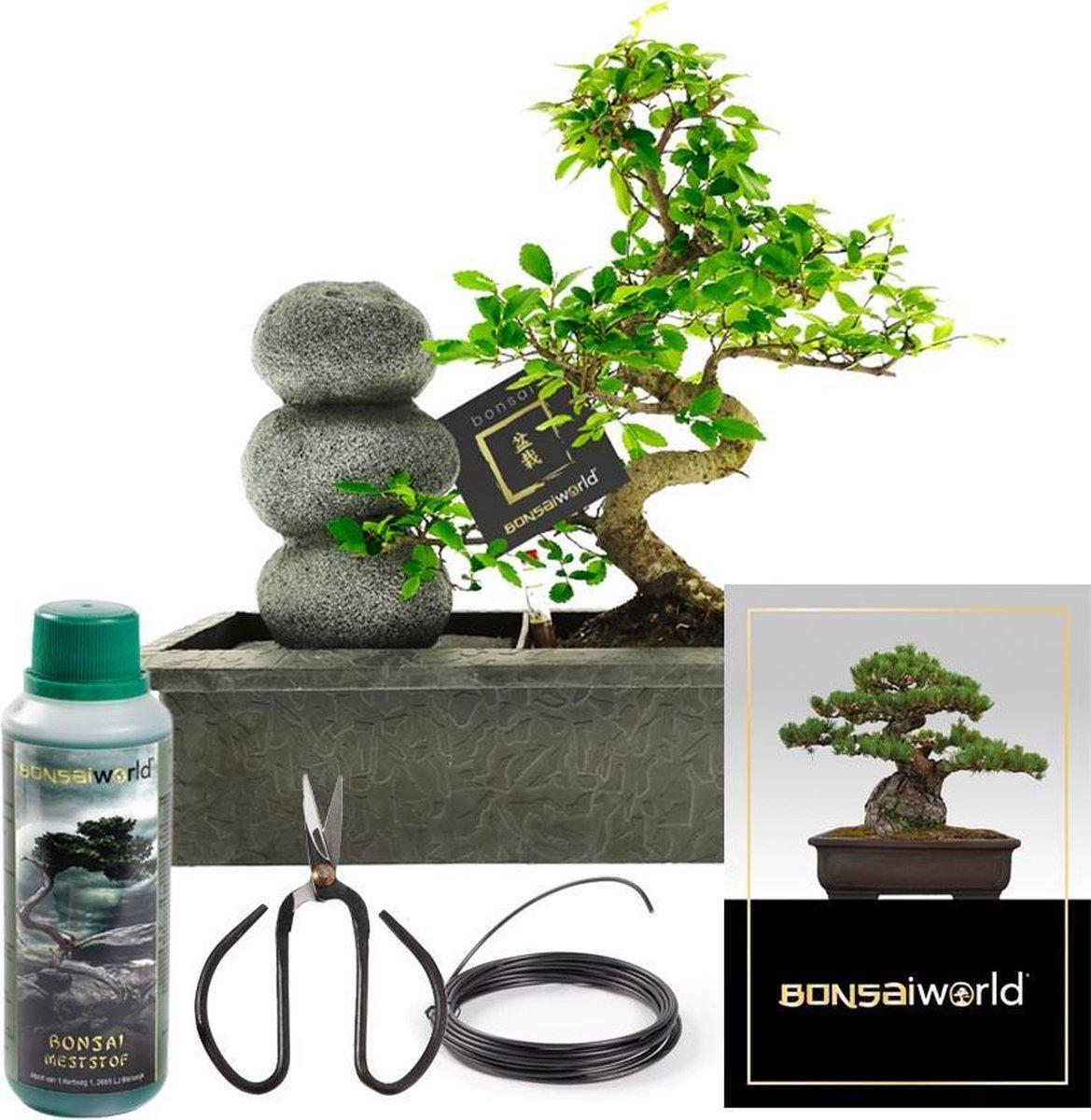 Bonsaiworld Bonsai Zen Stenen Waterval Set - Bonsai Starters Kit - Bonsai Boompje is 10 jaar oud - Hoogte️ 30-35 cm + Verzorgingskit - Bonsai- Schaar,