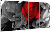 Glasschilderij Tulp   Rood, Grijs, Zwart   160x80cm 4Luik   Foto print op Glas    F002394