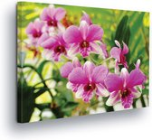 Flowers Orchids Pink Canvas Print 80cm x 60cm