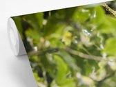 Fotobehang Quetzal - Quetzal op  tak fotobehang vinyl breedte 420 cm x hoogte 280 cm - Foto print op vinyl behang (in 7 formaten beschikbaar) - slaapkamer/woonkamer/kantoor