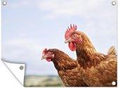 Tuinposter - Close-up van twee kippen - 40x30 cm