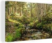 Bemoste boomstammen in het Nationaal park Sierra Guadarrama in Spanje Canvas 30x20 cm - klein - Foto print op Canvas schilderij (Wanddecoratie woonkamer / slaapkamer)