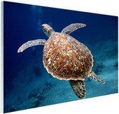 Zeeschildpad  Glas 30x20 cm - klein - Foto print op Glas (Plexiglas wanddecoratie)