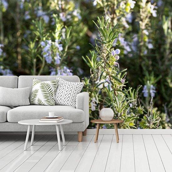 Fotobehang vinyl - Wilde rozemarijn planten met bloeiende bloemen breedte 335 cm x hoogte 250 cm - Foto print op behang (in 7 formaten beschikbaar)