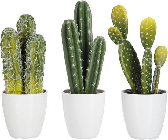 Dulaire Kunst Cactus Klein 3 st. 26 cm