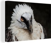 Close-up van de witte kop van een baardgier Canvas 30x20 cm - klein - Foto print op Canvas schilderij (Wanddecoratie woonkamer / slaapkamer)