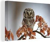 Ruigpootuil zit tussen de herfstbladeren Canvas 180x120 cm - Foto print op Canvas schilderij (Wanddecoratie woonkamer / slaapkamer) XXL / Groot formaat!