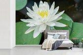 Fotobehang Witte Lotus - Libelle op witte lotus breedte 600 cm x hoogte 400 cm - Foto print op vinyl behang (in 7 formaten beschikbaar) - slaapkamer/woonkamer/kantoor