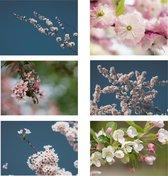 A-typist wenskaarten bloesem (ansichtkaarten, fotokaarten, bloemen)