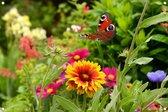 Tuinposter - Vlinder met bloemen - omgezoomde rand - 120x80cm