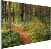 Een kruispunt in het bos Glas 180x120 cm - Foto print op Glas (Plexiglas wanddecoratie) XXL / Groot formaat!