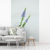 Fotobehang vinyl - Twee plantjes van de lange ereprijs in een glazen vaas breedte 150 cm x hoogte 220 cm - Foto print op behang (in 7 formaten beschikbaar)
