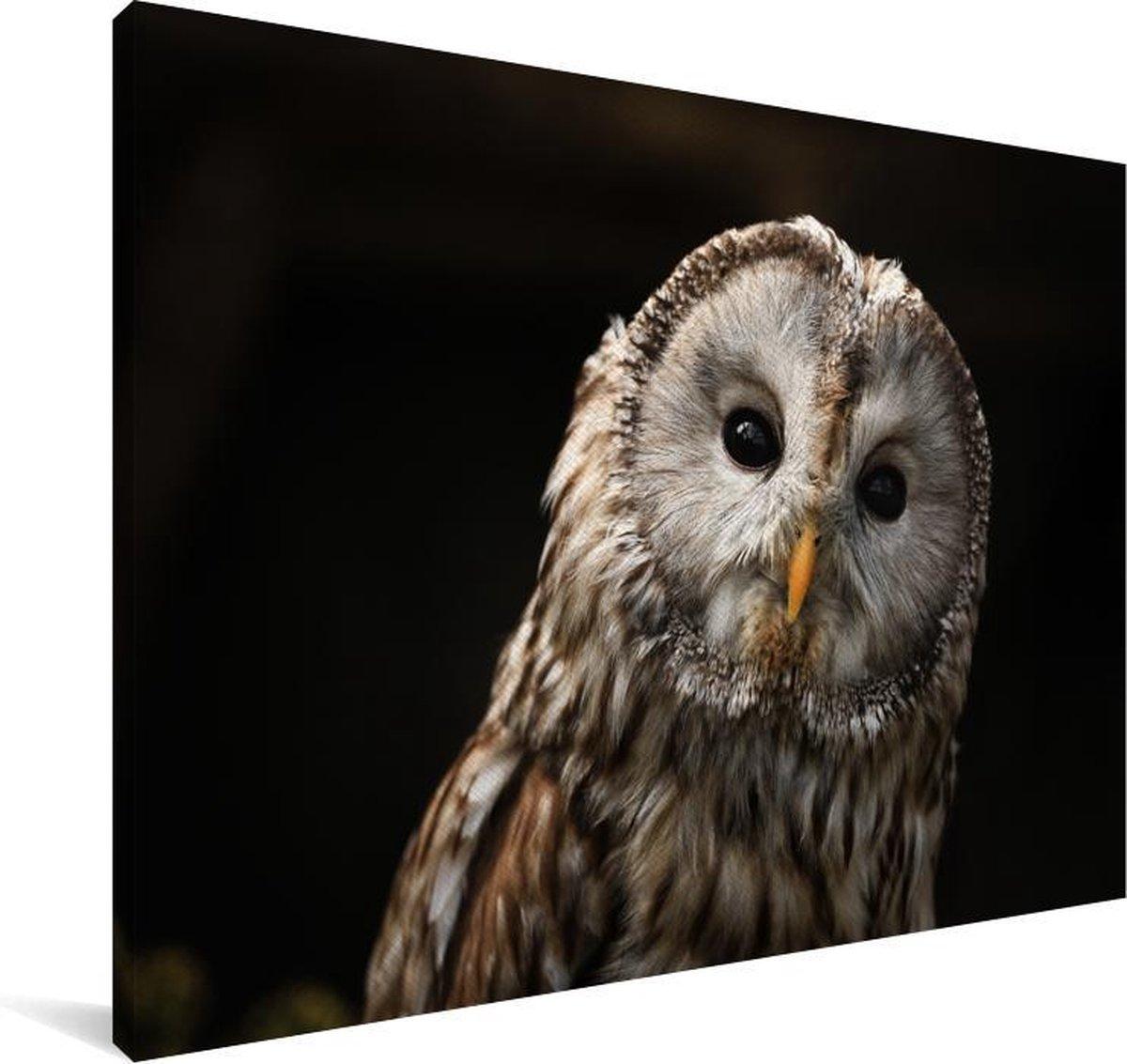 Een bosuil op een zwarte achtergrond Canvas 180x120 cm - Foto print op Canvas schilderij (Wanddecoratie woonkamer / slaapkamer) XXL / Groot formaat!