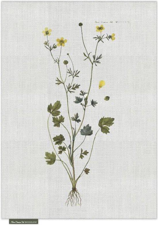 Theedoek - Butter Cups - Groen - 50 x 70 cm - Sodahl