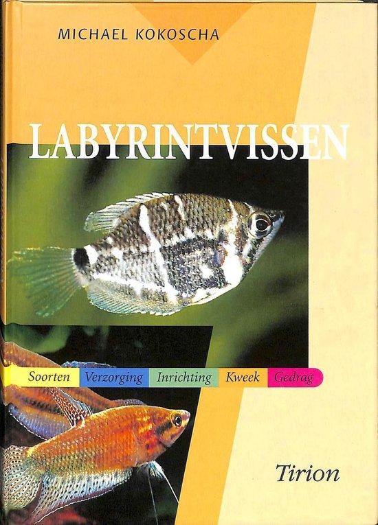Labyrintvissen - Michael Kokoscha |