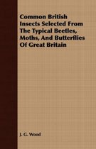 Common British Insects Selected From The Typical Beetles, Moths, And Butterflies Of Great Britain