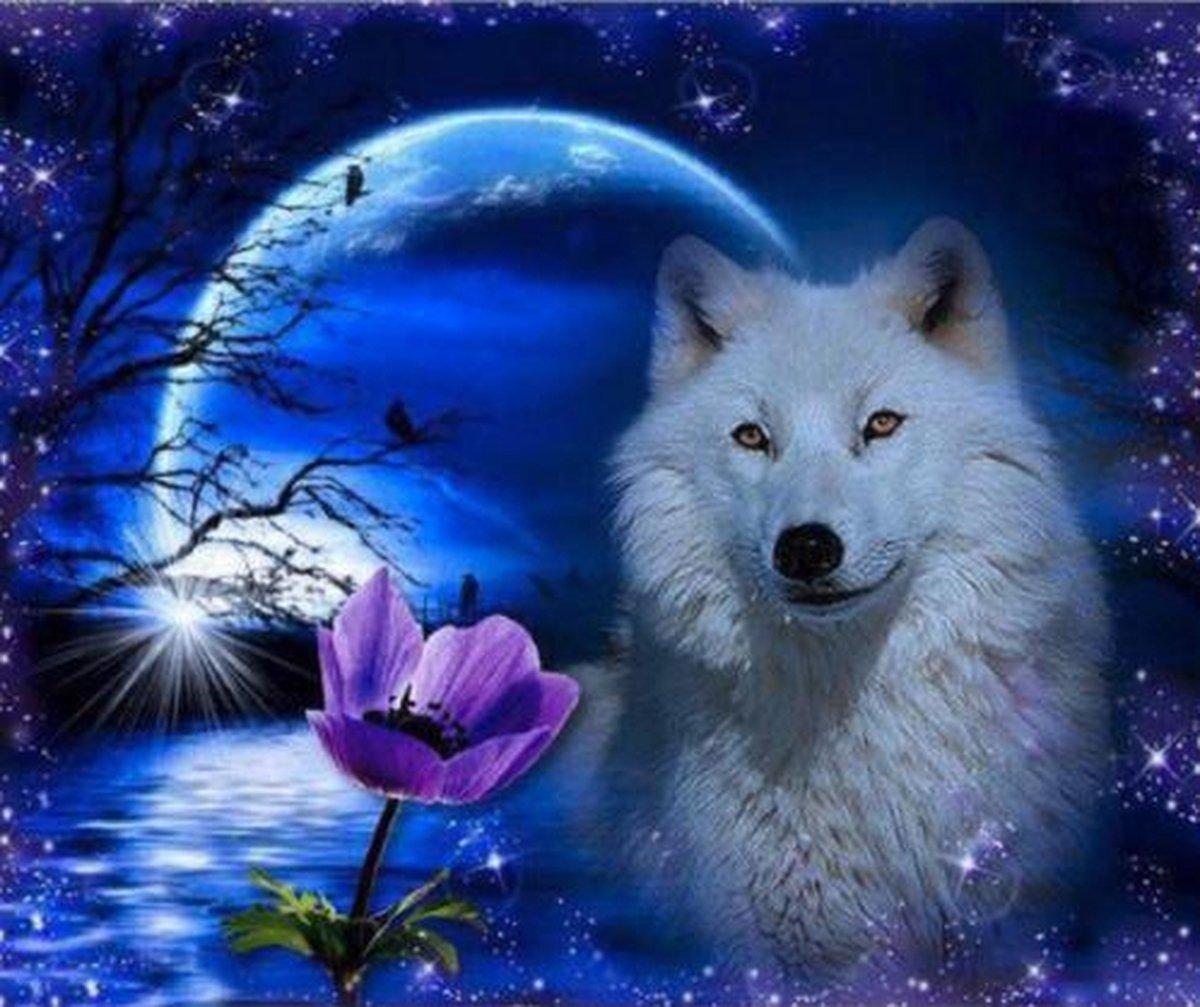 Diamond Painting Pakket Witte Wolf en de maan - FULL - Diamond Paintings - 40x30 cm - SEOS Shop ®