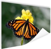 Monarchvlinder Poster 90x60 cm - Foto print op Poster (wanddecoratie woonkamer / slaapkamer)