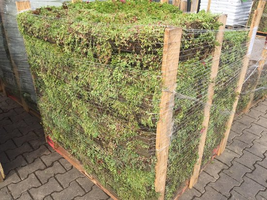 GroenDakCompleet Kant-en-klaar groendak-pakket  (18m2)