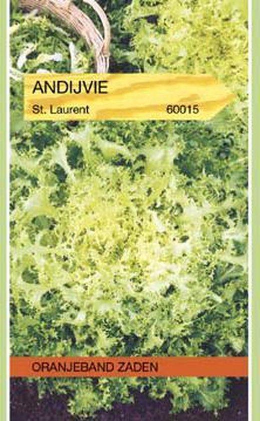 Oranjeband - Andijvie St. Laurent