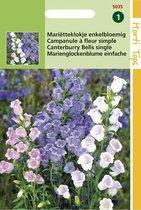 Hortitops Zaden - Campanula Medium Enkelbloemig Gemengd