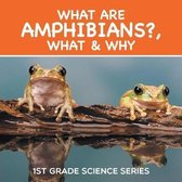 What Are Amphibians?, What & Why