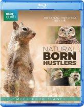 Bbc Earth; Natural Born Hustlers