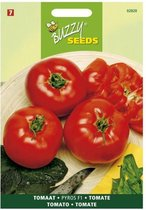 Buzzy - Tomaten Pyros F1 (Solanum lycopersicum)