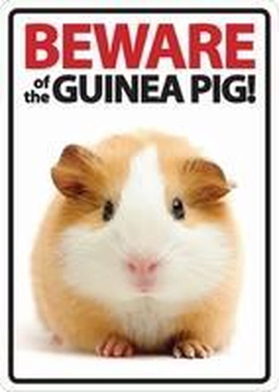 Beware Of The Guinea Pig!