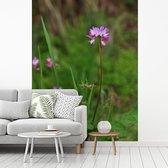 Een alfalfa of luzerne bloem midden in de natuur fotobehang vinyl breedte 250 cm x hoogte 340 cm - Foto print op behang (in 7 formaten beschikbaar)