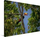 Reuzentoekan in een boom in Brazilië Canvas 140x90 cm - Foto print op Canvas schilderij (Wanddecoratie woonkamer / slaapkamer)