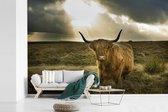 Fotobehang vinyl - Harige Schotse hooglander met zonnestralen breedte 360 cm x hoogte 240 cm - Foto print op behang (in 7 formaten beschikbaar)