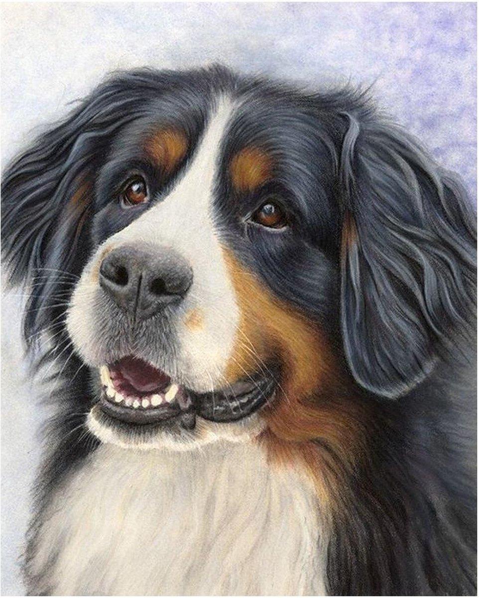 Premium Paintings - Berner Sennen Hond - Diamond Painting Volwassenen - Pakket Volledig / Pakket Full - 30x40