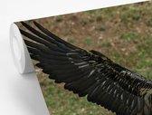 Behang - Fotobehang - Landende Lammergier met gestrekte vleugels - Breedte 390 cm x hoogte 260 cm