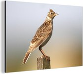 Bruin-getinte veldleeuwerik op een paal Aluminium 30x20 cm - klein - Foto print op Aluminium (metaal wanddecoratie)