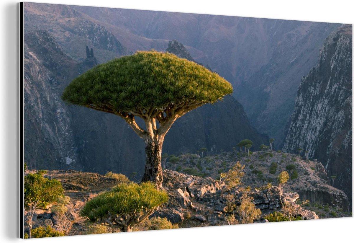 Drakenbloedboom met uitzicht op bergen bij Dixam-plateau in Jemen Aluminium 160x80 cm - Foto print op Aluminium (metaal wanddecoratie)