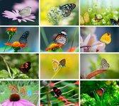 Cadeautip! | Luxe ansichtkaarten set Vlinders 10x15 cm | 24 stuks