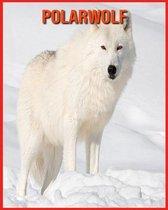Polarwolf: Erstaunliche Fakten & Bilder