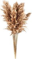Pampas pluimen | 5 stuks | Pampas gras | Droogbloemen | 100 cm | Decoratie pluimen | Luxury Living | Rietpluimen