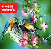 The Painting Club®️ Diamond painting voor volwassenen – MET VELE EXTRA's – Kleurrijke vogeltjes 30x40cm  - diamondpainting – uitgebreide starterskit met 13 extra opzetstukjes - Natuur - Vogeltjes - Dieren - Bloemen