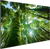 Tropische jungle in Azie Aluminium 120x80 cm - Foto print op Aluminium (metaal wanddecoratie)