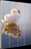 Zwaan  Hout 60x80 cm - Foto print op Hout (Wanddecoratie)