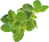 Click And Grow navulling - Oregano