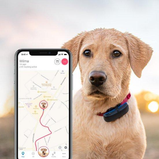 Is jouw hond een wegloper? Check hier de top 3 beste GPS-trackers!