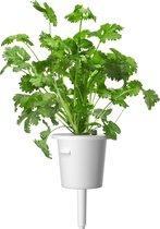 Click & Grow - Koriander refill (3-pack)