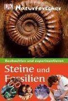 Naturforscher - Steine und Fossilien
