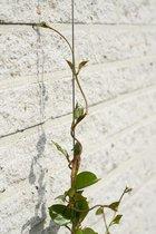 3 stuks Nature draadset voor klimplanten doorsnede 1,8 mm x 10 m