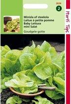 Minisla Goudgele Gotte - Lactuca sativa - set van 8 stuks